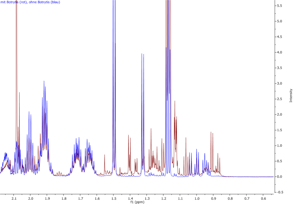 Abbildung 18: Ausschnitt aus dem Vergleich von Saft der Trauben ohne (blaue Linien) und mit (rote Linien) Botrytisbefall.
