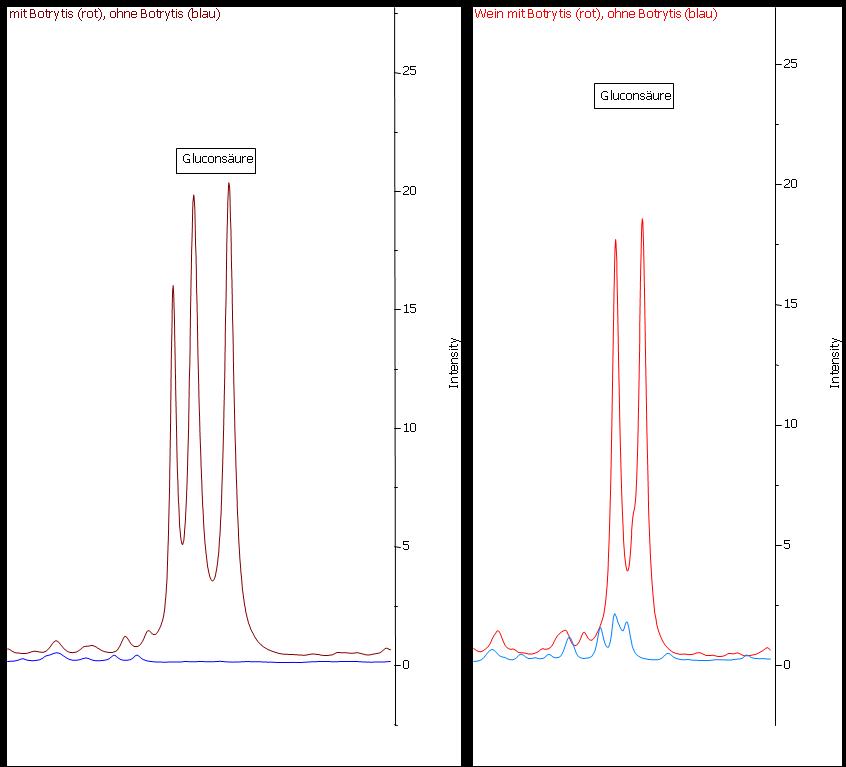 Abbildung 19: Gluconsäure im Most (links) und im Wein (rechts). Gluconsäure ist ein ausgezeichneter Marker für Botrytisbefall. Im Most der gesunden Trauben (blaue Linie) ist keine Gluconsäure nachweisbar. Im Most der faulen Trauben (rote Linie) liegt eine sehr hohe Konzentration vor. Durch die Gärung wird weder Gluconsäure abgebaut noch entsteht diese.