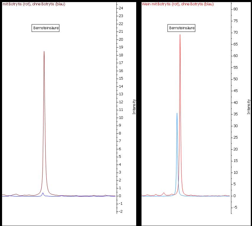 Abbildung 22: Vergleicht man nur die beiden Moste (links) miteinander, so verhält sich die Bernsteinsäure ähnlich der Ameisensäure – sie ist zwar auch im Saft der gesunden Trauben nachweisbar, aber ihre Konzentration wird durch Botrytisbefall um ein Vielfaches erhöht. Hier spielt es eine Rolle die Spektren vor und nach der Gärung zu betrachten, da Bernsteinsäure unabhängig vom Befall der Trauben mit Botrytis cinerea während der Gärung gebildet wird. Der Konzentrationsunterschied ist zwar auch noch nach der Gärung noch deutlich sichtbar, es wird jedoch viel schwieriger sein nur anhand dieses einen Parameters eine fundierte Aussage über den Botrytisbefall der Trauben zu treffen. An dieser Stelle zeigt sich deutlich, dass es die Vielzahl und die Bandbreite der Parameter sind, die die NMR-Analyse so aussagekräftig machen.