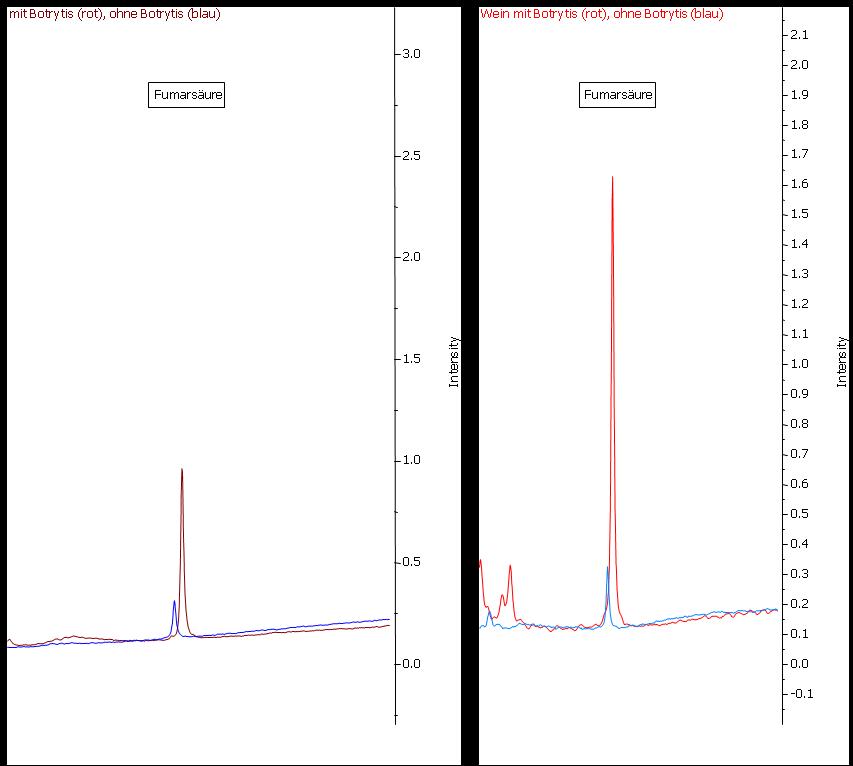Abbildung 23: Fumarsäure ist zwar auch im Most (links) gesunder Trauben (blaue Linie) nachweisbar, ihre Konzentration ist jedoch bei Botrytis-Befall um ein Vielfaches erhöht. Durch die Gärung findet nur eine unwesentliche Beeinflussung der Konzentration statt.